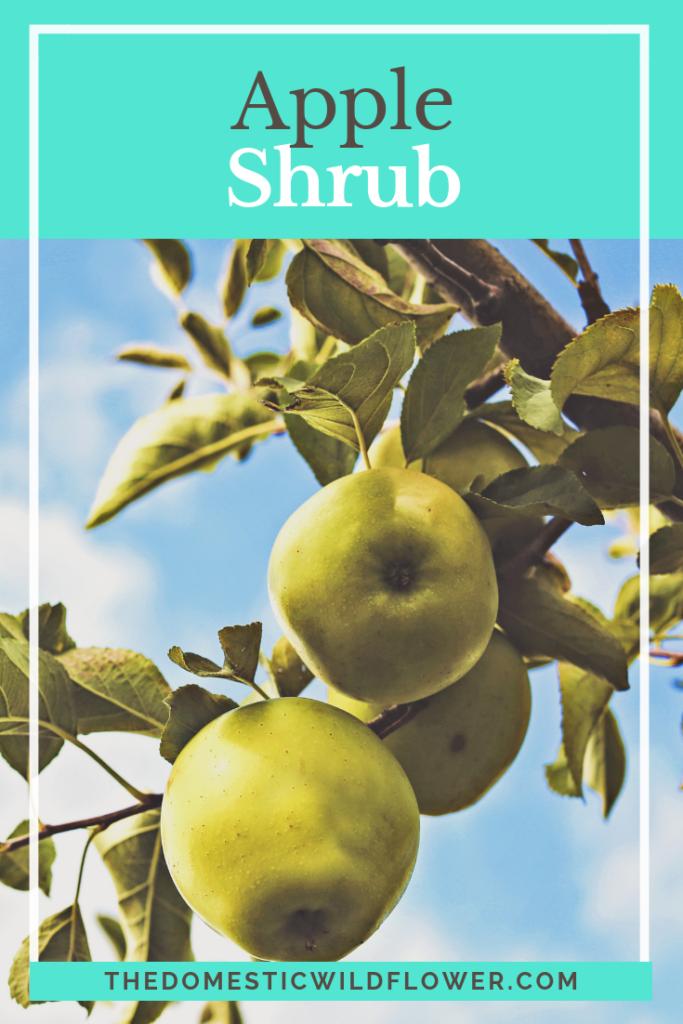 Apple Shrub