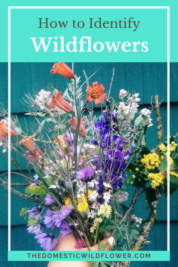 How to Identify Wildflowers