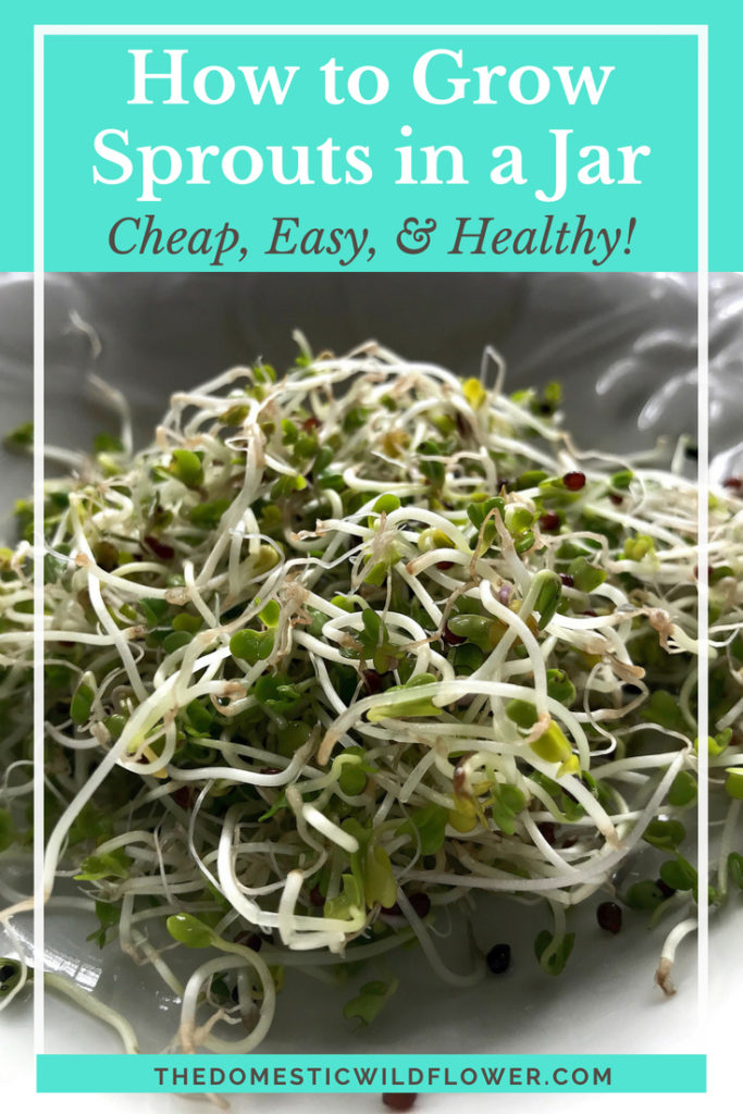 How to Grow Sprouts in a Jar   Super simple tutorial with a few pro tips for making this inexpensive, nutritious microgreen in a regular mason jar!