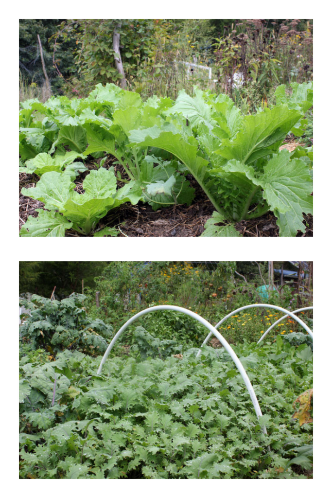 10 Easy to Grow Vegetables for Your Fall Garden This post has tons of great tips for a successful and easy fall gardening experience!