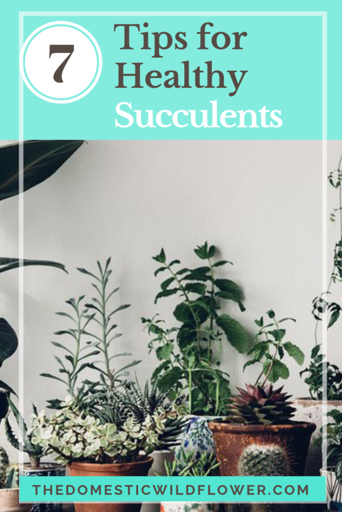 7 Tips For Healthy Succulents